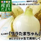 熊本県より産地直送 JAあしきた サラたまちゃん LAサイズ 5キロ  15玉前後 玉葱 タマネギ