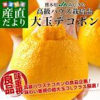 送料無料 熊本県より産地直送 JAあしきた ハウス栽培 大玉デコポン (良品) 3キロ(7玉から8玉)でこぽん デコぽん 芦北 葦北