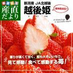 送料無料 新潟県より産地直送 JA北越後 越後姫(えちごひめ)900から960g(450から480g(12〜15粒入り)×2パック) ゆりカーゴタイプ イチゴ 苺 いちご
