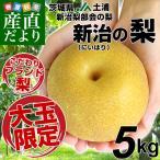 茨城県より産地直送 JA土浦 新治梨部会の梨  大玉限定 5キロ(8玉から14玉)なし ナシ