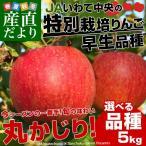 送料無料 岩手県より産地直送 JAいわて中央 特別栽培リンゴ  5キロ (14から23玉) 林檎 りんご