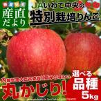 送料無料 岩手県より産地直送 JAいわて中央 皮ごとまるごと!特別栽培りんご 5キロ (14から23玉) 林檎 りんご リンゴ