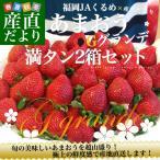 福岡県より産地直送 JAくるめ あまおう Gグランデ 2箱セット 合計1080g (270g×4パック:合計24から48粒) 送料無料 苺 いちご イチゴ ※クール便