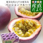 鹿児島県より産地直送 JAそお鹿児島 パッションフルーツ 2Lから3Lサイズ 1.2キロ(9から12玉) 送料無料 トロピカルフルーツ 曽於