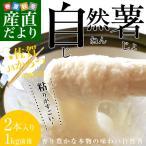送料無料 佐賀県より産地直送 JAからつ 自然薯 2本入り 約1キロ じねんじょ やまいも