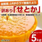 送料無料 佐賀県より産地直送 JAからつ 訳ありせとか SからLサイズ 5キロ(25から42玉) 柑橘 かんきつ オレンジ みかん