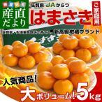 送料無料 佐賀県より産地直送 JAからつ はまさき ご家庭用 5キロ箱(35から45玉)