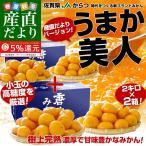 送料無料 佐賀県より産地直送 JAからつ 小粒うまか美人 高糖度みかん 2Sから3Sサイズ 約2キロ×2箱  U・M・K美人 蜜柑 温州みかん ミカン