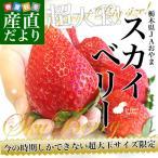 送料無料 栃木県より産地直送 スカイベリー 超大粒 1箱600g(10粒から12粒) いちご イチゴ クール便