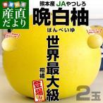 熊本県より産地直送 JAやつしろ 晩白柚 超大玉 2玉 4から5キロ 送料無料 ばんぺいゆ 最大級 柑橘 八代