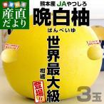 熊本県より産地直送 JAやつしろ 晩白柚 大玉 3玉 4から5キロ ばんぺいゆ バンペイユ