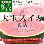 熊本県産 JA鹿本 大玉スイカ Lサイズ (6キロ以上) 送料無料 市場発送 西瓜 すいか 熊本スイカ
