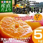 送料無料 愛媛県より産地直送 JAにしうわ 日の丸みかん ガキ大将 LからMサイズ 約5キロ(約40から50玉) 蜜柑 みかん ミカン