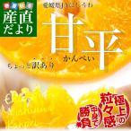 送料無料 愛媛県より産地直送 JAにしうわ 甘平(かんぺい) ちょっと訳あり Lから3Lサイズ 3キロ(10から15玉)