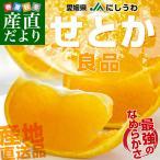 送料無料 愛媛県より産地直送 JAにしうわ せとか 優品 Mから2Lサイズ 5キロ(20から30玉)