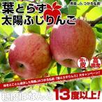 送料無料 JAつがる弘前 葉とらず太陽ふじりんご 糖度13度以上 約3キロ(9から13玉) 林檎 りんご リンゴ