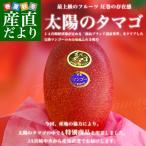 宮崎県より産地直送 JA宮崎中央 宮崎完熟マンゴー 太陽のタマゴ 2L×2玉  (350から459g ×2玉)
