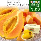 送料無料 宮崎県より産地直送 JA宮崎中央 フルーツパパイア サンライズソロ 3Lから4Lサイズ 1キロ入り (2玉)ぱぱいあ ぱぱいや