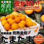 宮崎県から産地直送 JA宮崎中央 たまたま 2Lサイズ 1キロ(約40粒)きんかん 金柑
