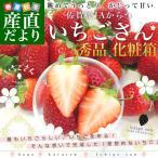 佐賀県より産地直送 JAからつ 新品種いちご いちごさん 秀品 3Lサイズ 500g化粧箱 20粒から24粒 送料無料 イチゴさん いちごサン 唐津