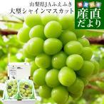送料無料 山梨県より産地直送 JAふえふき 大型シャインマスカット 合計1.2キロ以上 (大型2房入り) ぶどう 葡萄 ブドウ