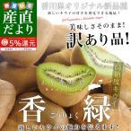 送料無料 香川県より産地直送 JA香川県 キウイフルーツ 香緑(こうりょく) 約3キロ(15から30玉前後)