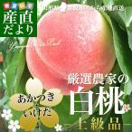 山形県 東根地区から産地直送「厳選農家の白桃」(あかつき・いけだ)上級品2キロ 6玉から7玉