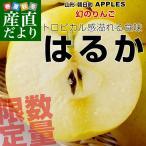 送料無料 山形より産地直送 朝日町 APPLE'S「はるか」2キロ(5玉〜8玉)林檎 りんご リンゴ