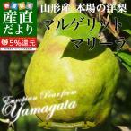 送料無料 山形県より産地直送 洋梨 マルゲリットマリーラ ご家庭用 約5キロ(8から16玉)