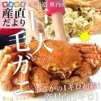 送料無料 北海道・稚内産 浜ゆで巨大毛ガニ ジャンボ姿1尾 約1キロ かに カニ 蟹