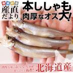 柳葉魚 - 北海道産 本ししゃも 肉厚なオス 30尾 約750g