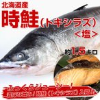 送料無料 北海道産時鮭(トキシラズ) 塩 約1.5キロ