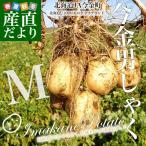 北海道産 JA今金町 じゃがいも 今金男爵 Mサイズ 10キロ 馬鈴薯 ジャガイモ 芋 送料無料 ※市場スポット
