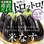 高知県産 JAグループ高知 米なす A級品9玉 約2.5キロ 送料無料 べいなす 茄子 ナス 市場発送