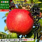 送料無料 岩手県より産地直送 JAいわて中央 葉とらずサンふじりんご 葉ップル 5キロ(14玉から20玉) 林檎 リンゴ お歳暮 御歳暮 冬ギフト