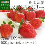 送料無料 栃木県産 スカイベリー DXタイプ 600g (300g×2パック) いちご
