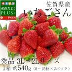 送料無料 佐賀県産 新ブランドいちご いちごさん 秀品 3Lサイズ (270g×2P) イチゴ 苺