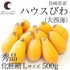 送料無料 長崎県産  ハウスびわ (大西海) Lサイズ 500g化粧箱 (12玉入り)  びわ