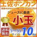 ポンカンジュースに 【小玉】(S・SSサイズ)土佐ポンカン 10kg 高知県産 (注)ご家庭用