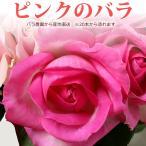 ピンクのバラ 50cm×1本 ※20本以上 花束 トゲ取り無料※在庫お問い合わせください(平日0884-73-3944)