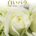 白いバラ 50cm×1本 ※20本以上 花束 トゲ取り無料※在庫お問い合わせください(平日0884-73-3944)