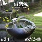 信楽焼き めだか鉢 和風 蛙付 幅34 高さ16 メダカ鉢 睡蓮鉢 gws NHK 信楽 スカーレット