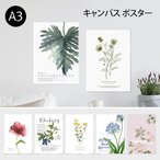 ポスター A3 (キャンバス素材) ボタニカルコレクションVo.2 花 植物 シンプル おしゃれ アートポスター アートプリント フォトポスター サンサンフー