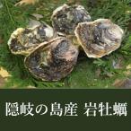 島根県隠岐産で三年かけて育てた岩牡蠣 海輝王(イワガキ)を送料無料で産地直送通販 生食用3 L(300〜350g)サイズ×5個