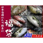 其它 - [送料無料]店長入魂「お得意様満足」日本海鮮魚の福袋 [当店人気No.1 中身はおまかせの鮮魚セット]