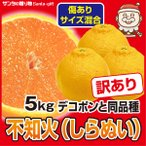 訳あり サイズ混合 香川デコポン  5kg 柑橘の王様 瀬戸内香川県産 デコポン 糖度と酸味のバランスがたまらない