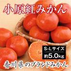 きれいなMサイズ 香川で生まれた 奇跡のみかん 小原紅早生金時みかん 5kg 小原紅みかん  送料無料 紅くて 甘い