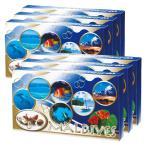 [送料無料] モルディブお土産 | モルディブ シーシェルチョコレート 6箱セット【184045】