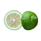 グリーンレモン 5kg 国産 防腐剤・防かび剤不使用 ノーワックス レモン 送料無料 瀬戸内レモン 国産レモン 青レモン