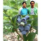 生 ブルーベリー 6パック 農薬 不使用  完熟 ブルーベリー 朝摘み 特別栽培 送料無料